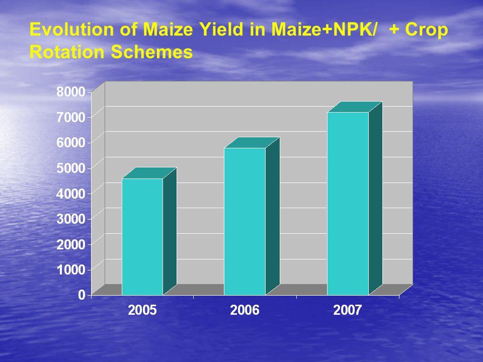 Evolution of Maize Yield in Maize+NPK/ + Crop Rotation Schemes