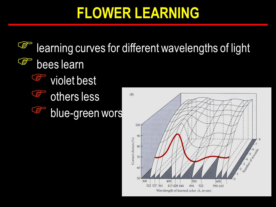 F learning curves for different wavelengths of light F bees learn F violet best F others less F blue-green worst FLOWER LEARNING