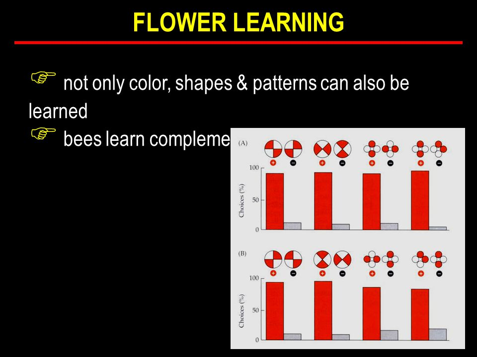 F not only color, shapes & patterns can also be learned F bees learn complementary patterns...
