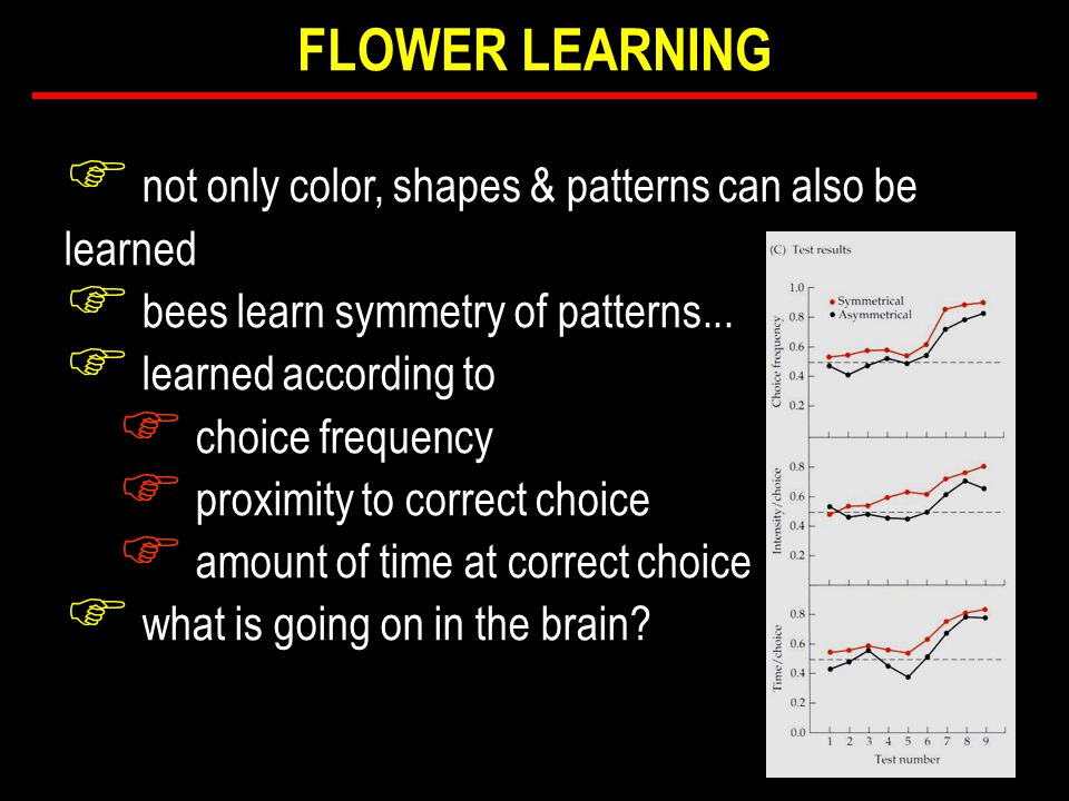 F not only color, shapes & patterns can also be learned F bees learn symmetry of patterns...