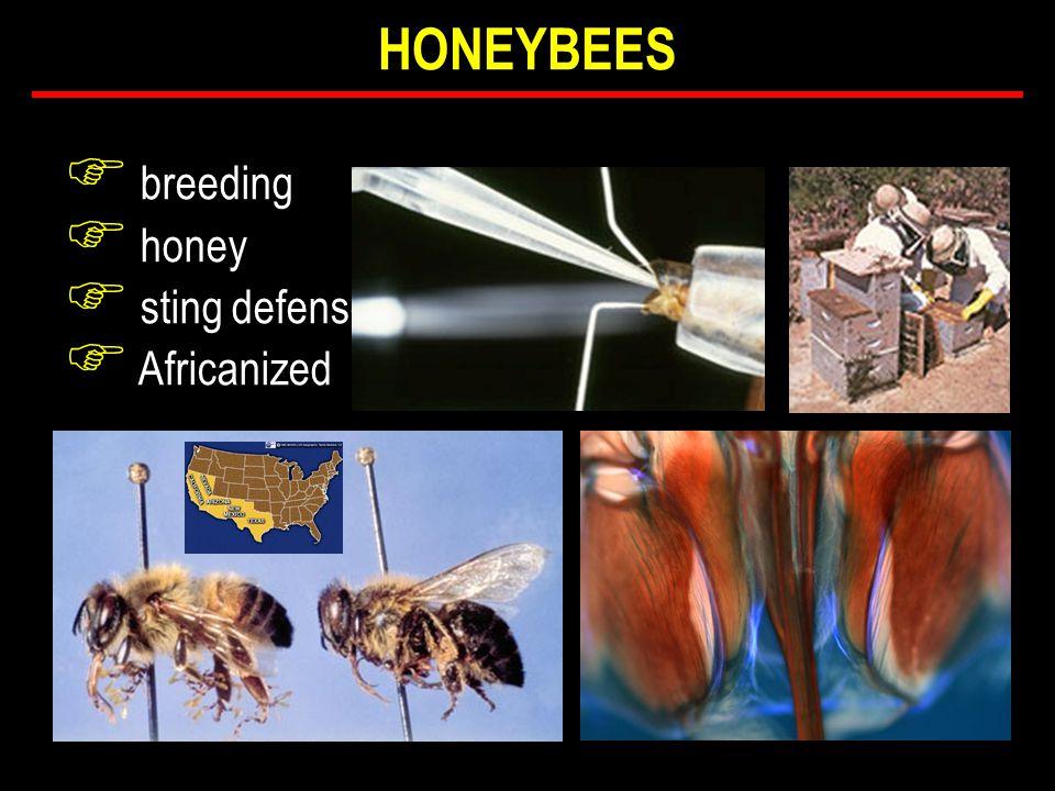 F breeding F honey F sting defense F Africanized HONEYBEES