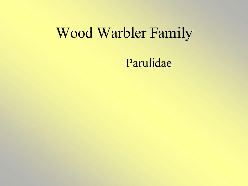 Wood Warbler Family Parulidae
