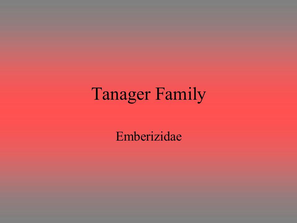 Tanager Family Emberizidae