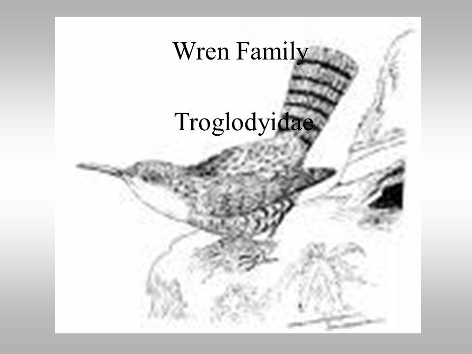 Wren Family Troglodytidae Wren Family Troglodyidae