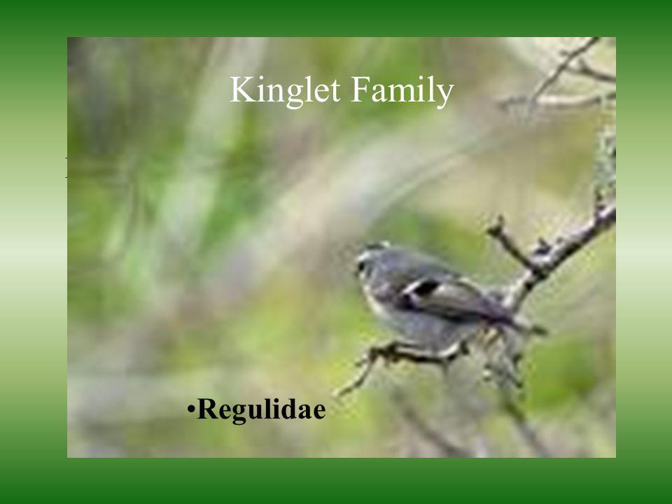 Kinglets Family Regulidae Kinglet Family Regulidae