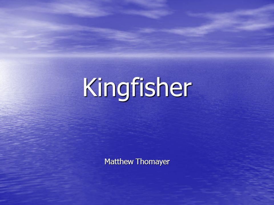 Kingfisher Matthew Thomayer