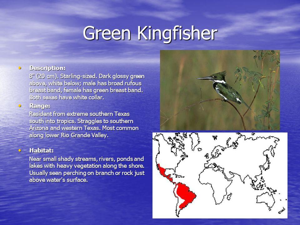 Green Kingfisher Description: Description: 8 (20 cm).