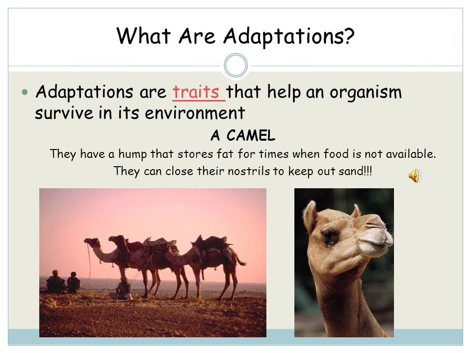 What Are Adaptations.