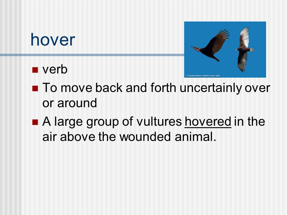 verb To move back and forth uncertainly over or around A large group of vultures hovered in the air above the wounded animal.