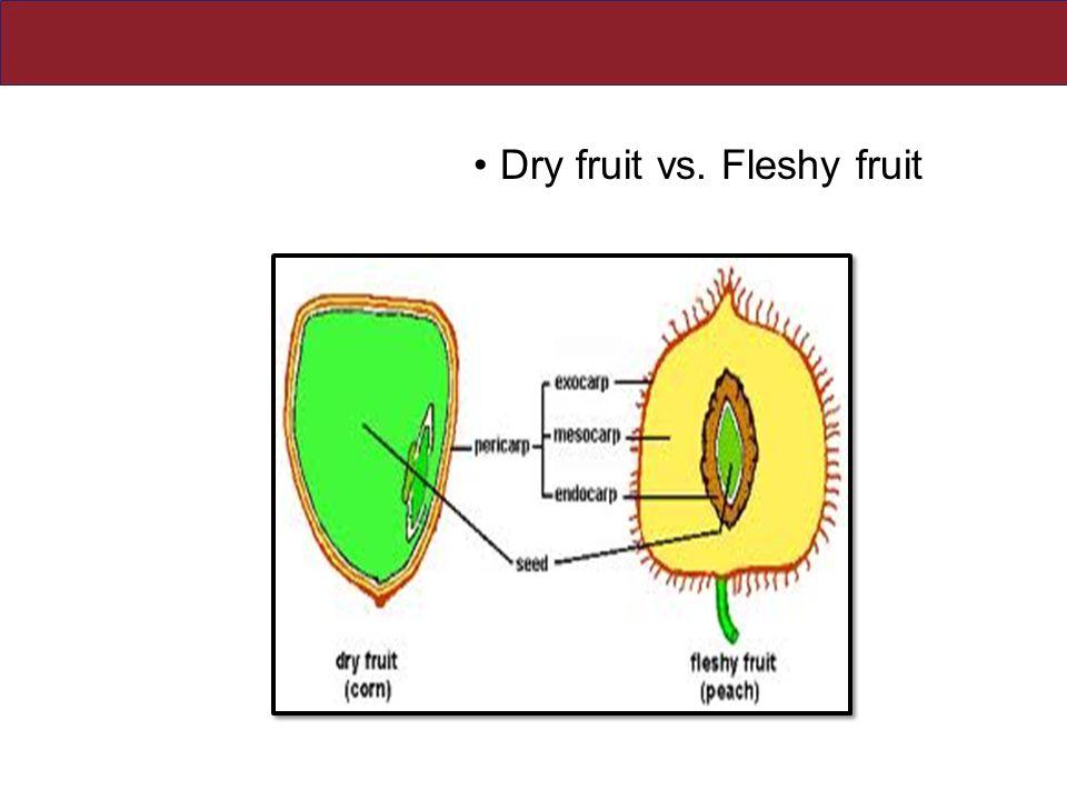 Dry fruit vs. Fleshy fruit