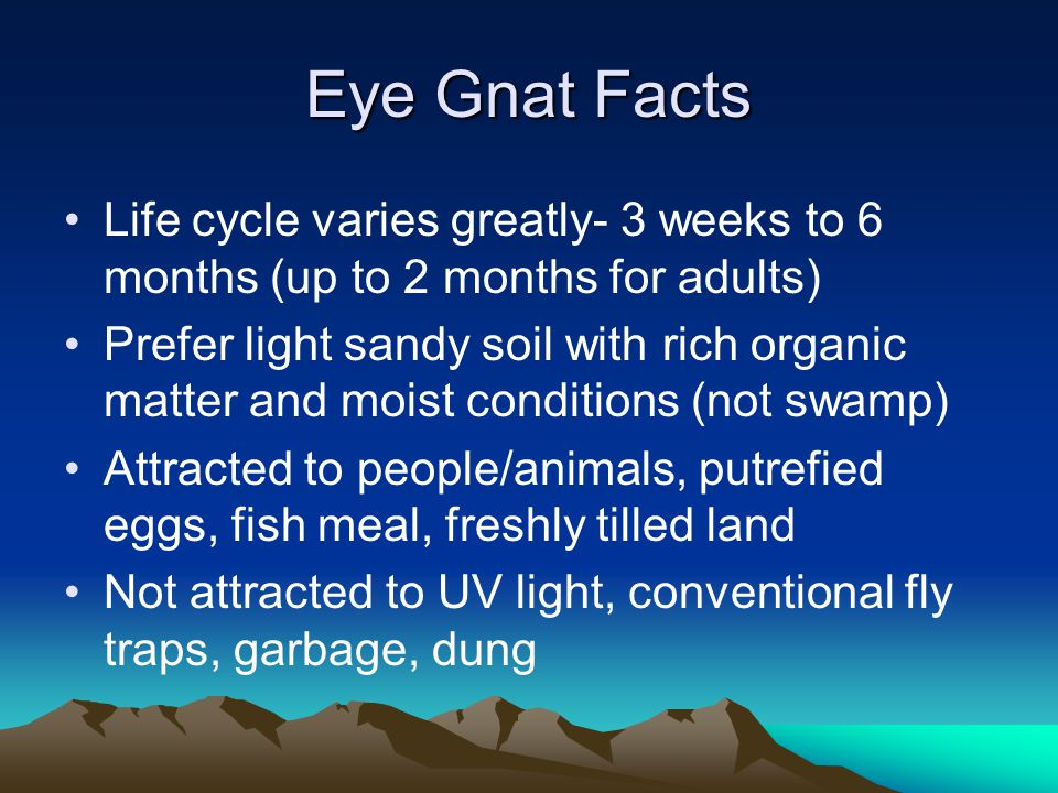 Eye Gnat Facts Life cycle varies greatly- 3 weeks to 6 months (up to 2 months for adults) Prefer light sandy soil with rich organic matter and moist c