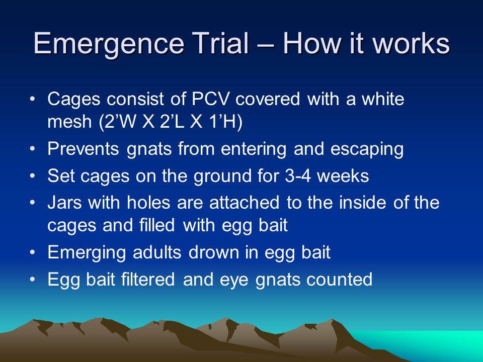 Emergence Trial – How it works Cages consist of PCV covered with a white mesh (2'W X 2'L X 1'H) Prevents gnats from entering and escaping Set cages on the ground for 3-4 weeks Jars with holes are attached to the inside of the cages and filled with egg bait Emerging adults drown in egg bait Egg bait filtered and eye gnats counted