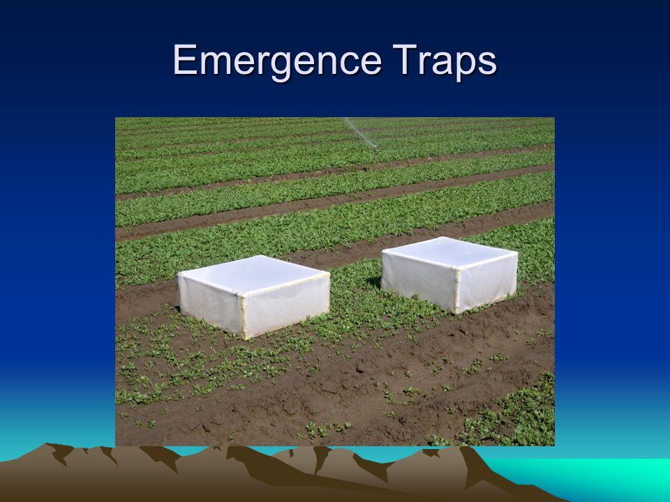 Emergence Traps