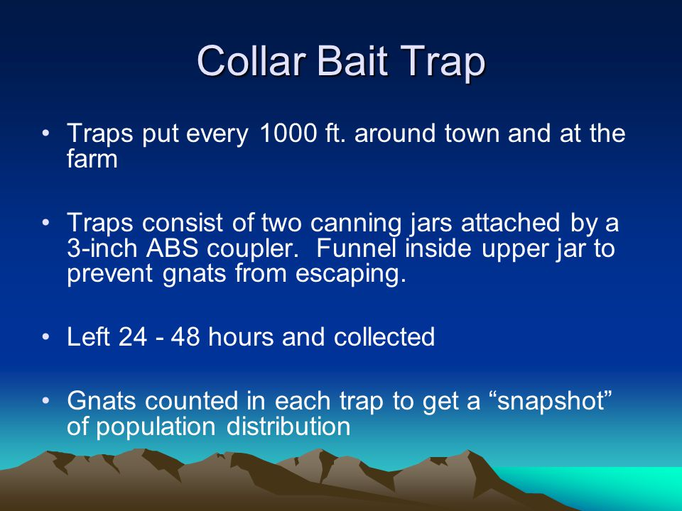 Collar Bait Trap Traps put every 1000 ft. around town and at the farm Traps consist of two canning jars attached by a 3-inch ABS coupler. Funnel insid