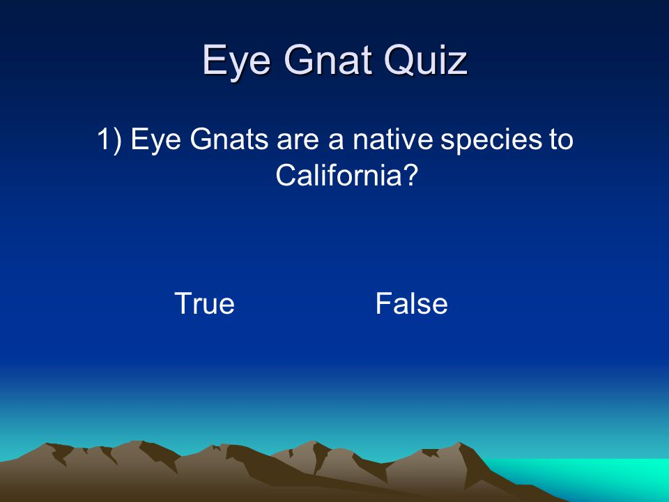 Eye Gnat Facts Life cycle varies greatly- 3 weeks to 6 months (up to 2 months for adults) Prefer light sandy soil with rich organic matter and moist conditions (not swamp) Attracted to people/animals, putrefied eggs, fish meal, freshly tilled land Not attracted to UV light, conventional fly traps, garbage, dung