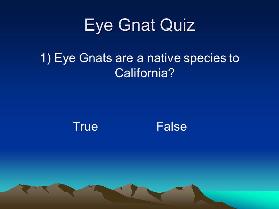 Eye Gnat Quiz 1) Eye Gnats are a native species to California? True False