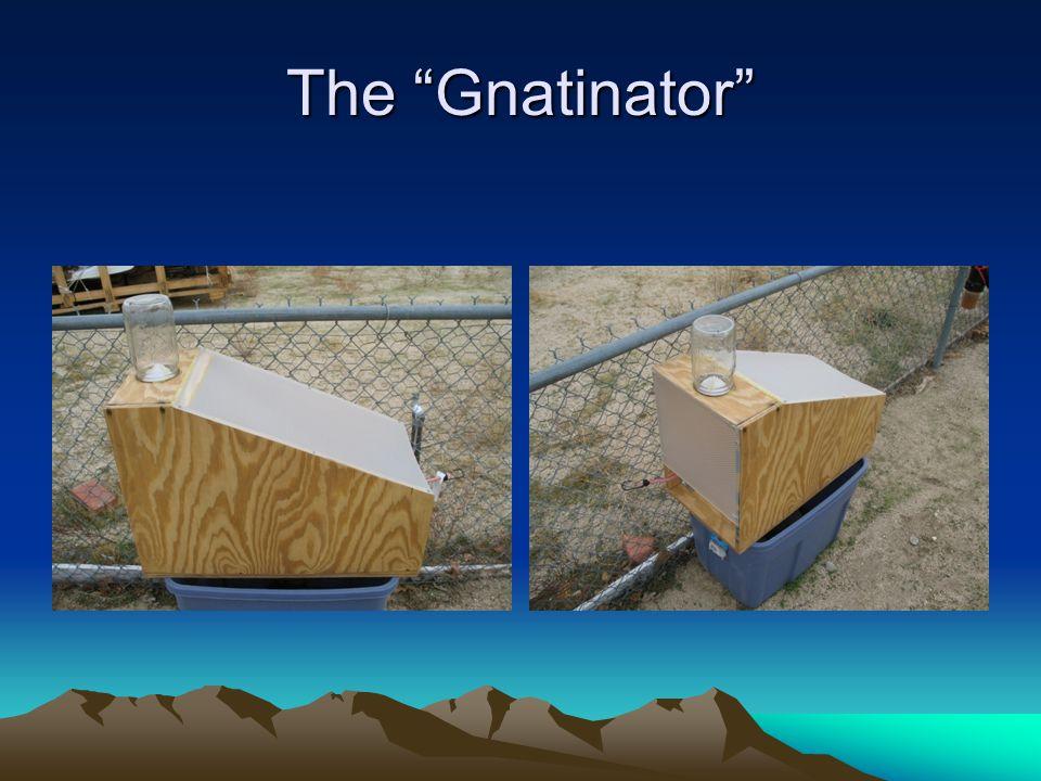 "The ""Gnatinator"""