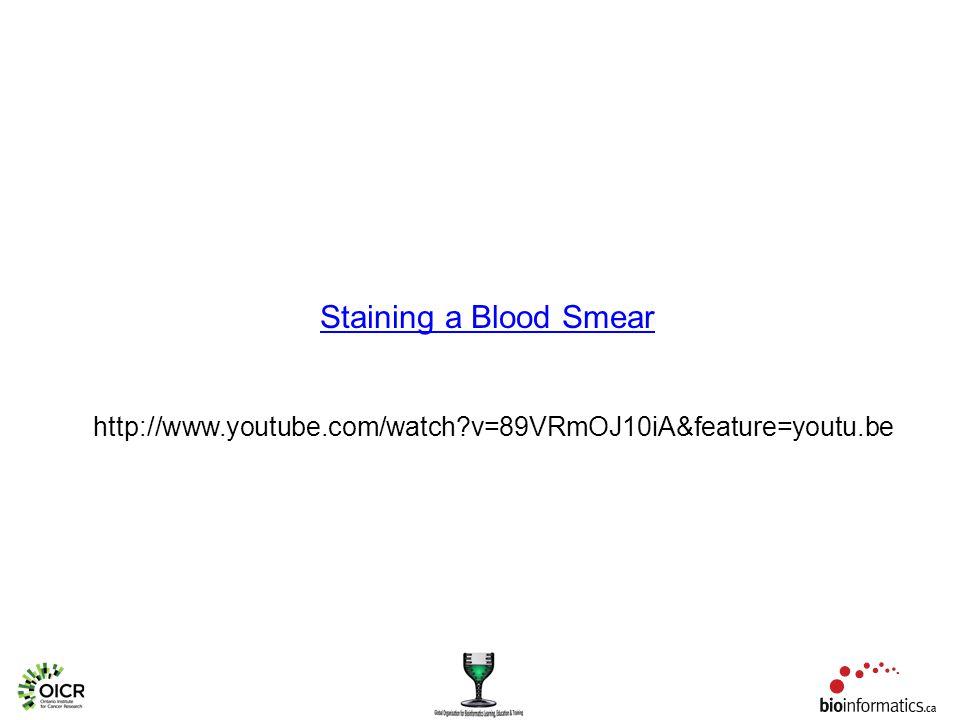 Staining a Blood Smear http://www.youtube.com/watch v=89VRmOJ10iA&feature=youtu.be