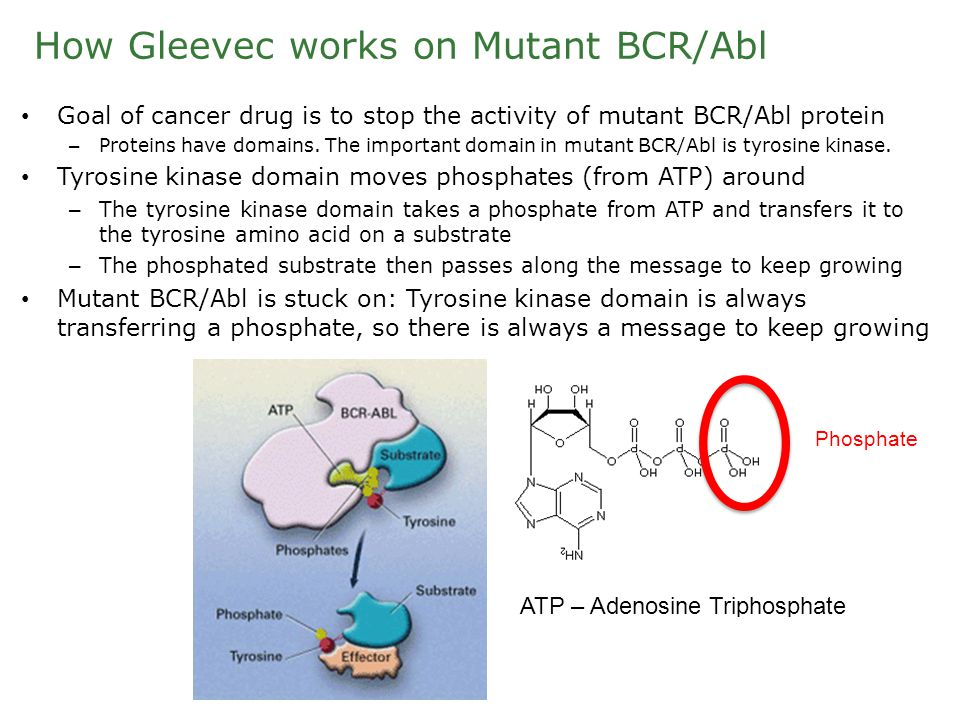 How Gleevec works on Mutant BCR/Abl Goal of cancer drug is to stop the activity of mutant BCR/Abl protein – Proteins have domains.