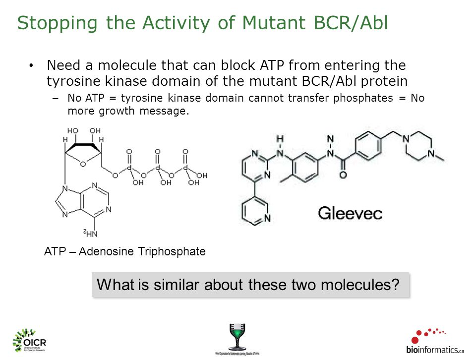 Stopping the Activity of Mutant BCR/Abl Need a molecule that can block ATP from entering the tyrosine kinase domain of the mutant BCR/Abl protein – No ATP = tyrosine kinase domain cannot transfer phosphates = No more growth message.