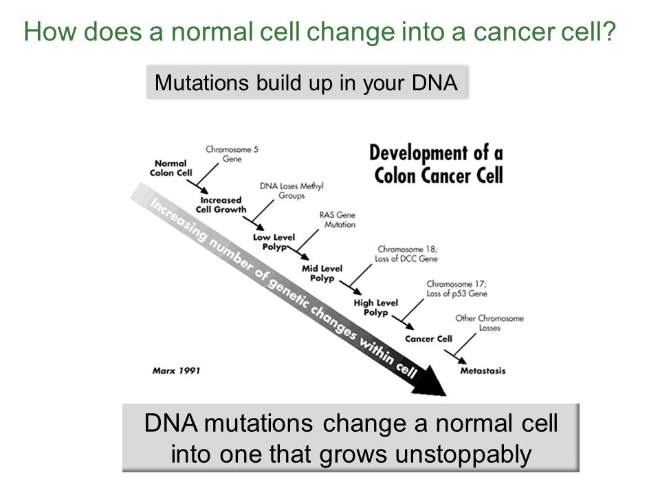 How does a normal cell change into a cancer cell.