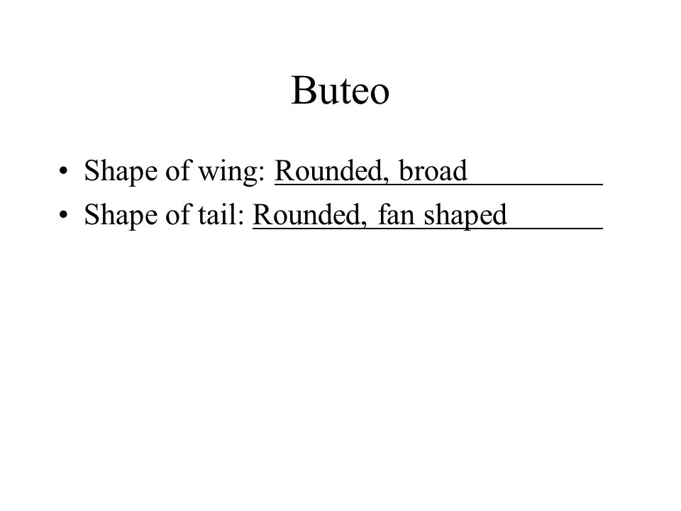 Buteo Shape of wing: Rounded, broad Shape of tail: Rounded, fan shaped