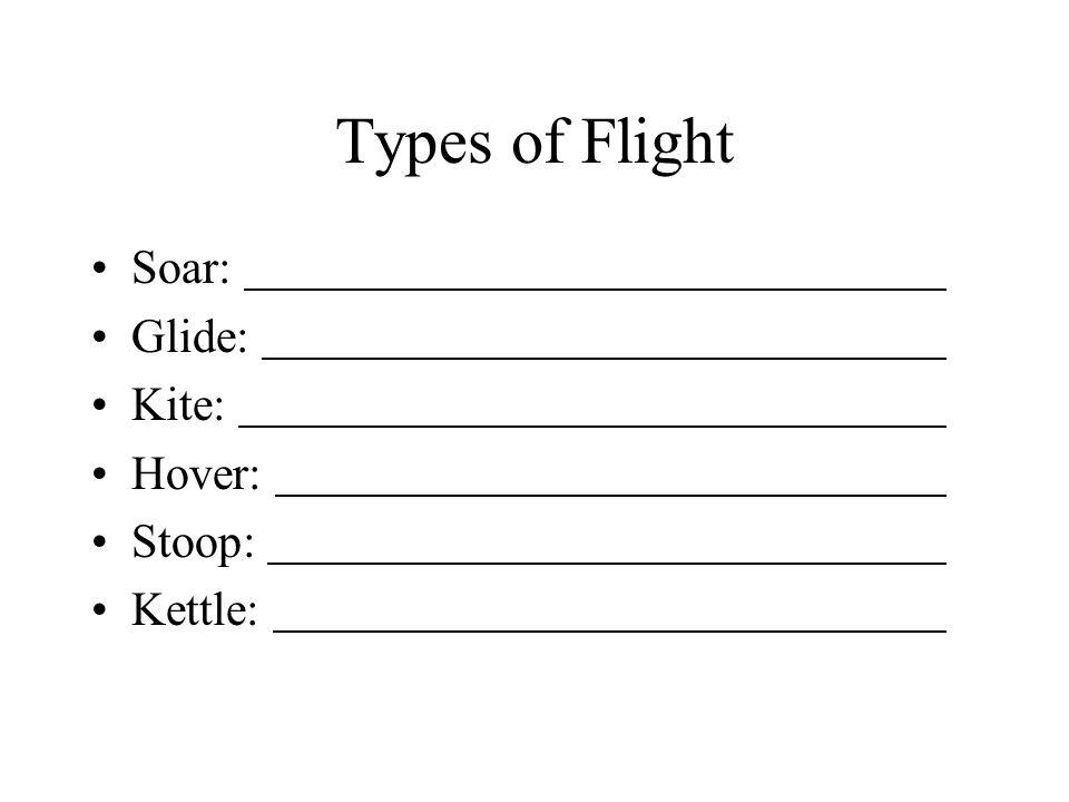 Types of Flight Soar: Glide: Kite: Hover: Stoop: Kettle: