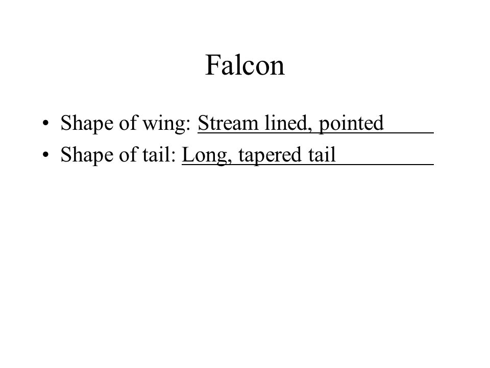 Falcon Shape of wing: Stream lined, pointed Shape of tail: Long, tapered tail