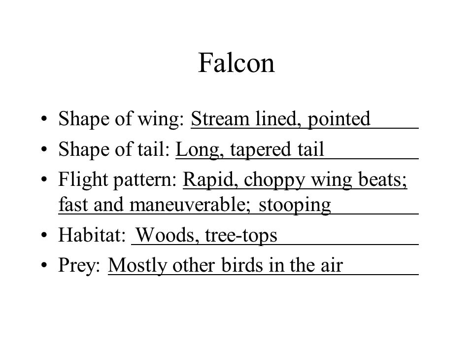 Falcon Shape of wing: Stream lined, pointed Shape of tail: Long, tapered tail Flight pattern: Rapid, choppy wing beats; fast and maneuverable; stooping Habitat: Woods, tree-tops Prey: Mostly other birds in the air