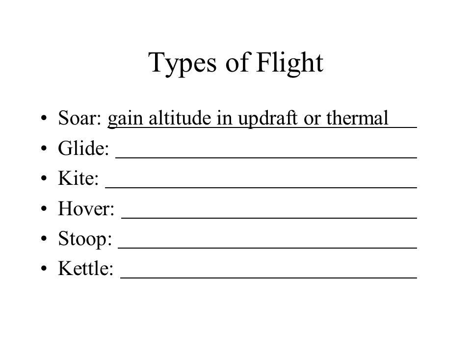 Types of Flight Soar: gain altitude in updraft or thermal Glide: Kite: Hover: Stoop: Kettle: