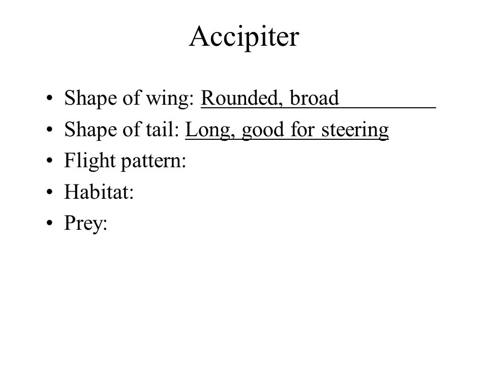 Accipiter Shape of wing: Rounded, broad Shape of tail: Long, good for steering Flight pattern: Habitat: Prey: