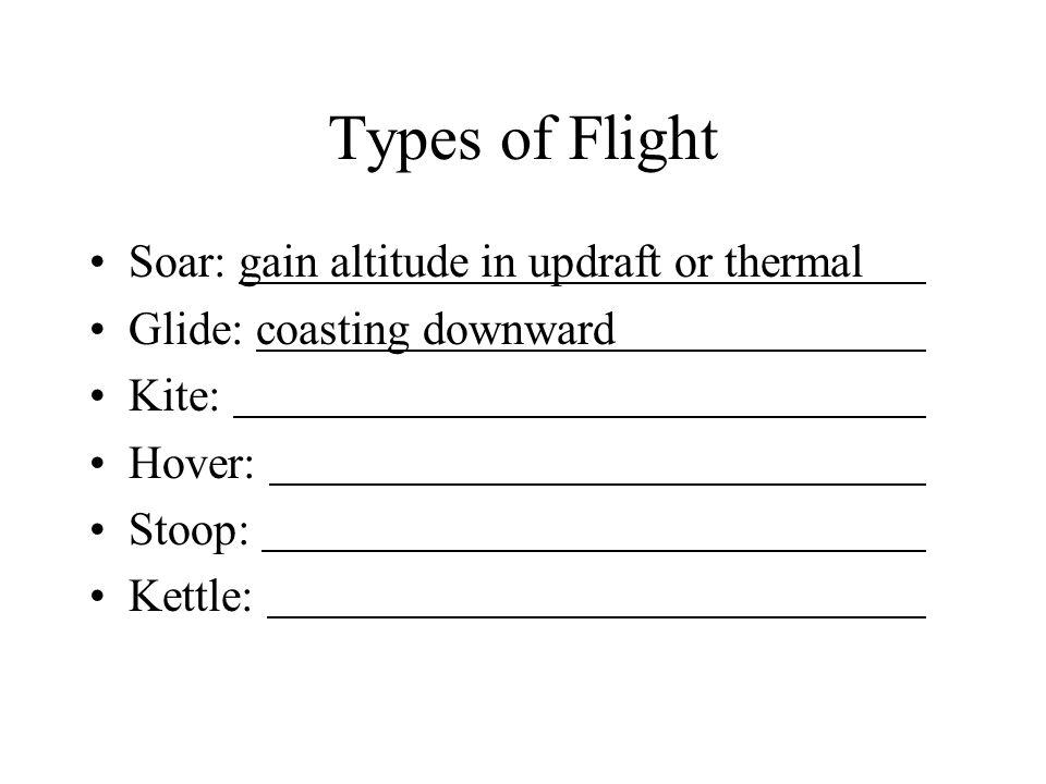 Types of Flight Soar: gain altitude in updraft or thermal Glide: coasting downward Kite: Hover: Stoop: Kettle: