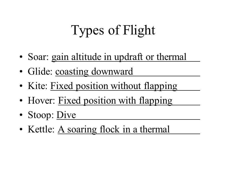 Types of Flight Soar: gain altitude in updraft or thermal Glide: coasting downward Kite: Fixed position without flapping Hover: Fixed position with flapping Stoop: Dive Kettle: A soaring flock in a thermal