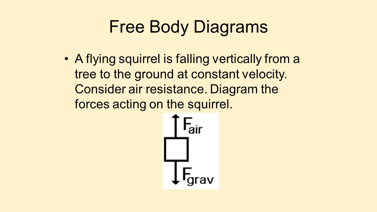 Free Body Diagrams A flying squirrel is falling vertically from a tree to the ground at constant velocity. Consider air resistance. Diagram the forces