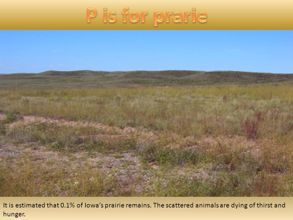 It is estimated that 0.1% of Iowa's prairie remains.