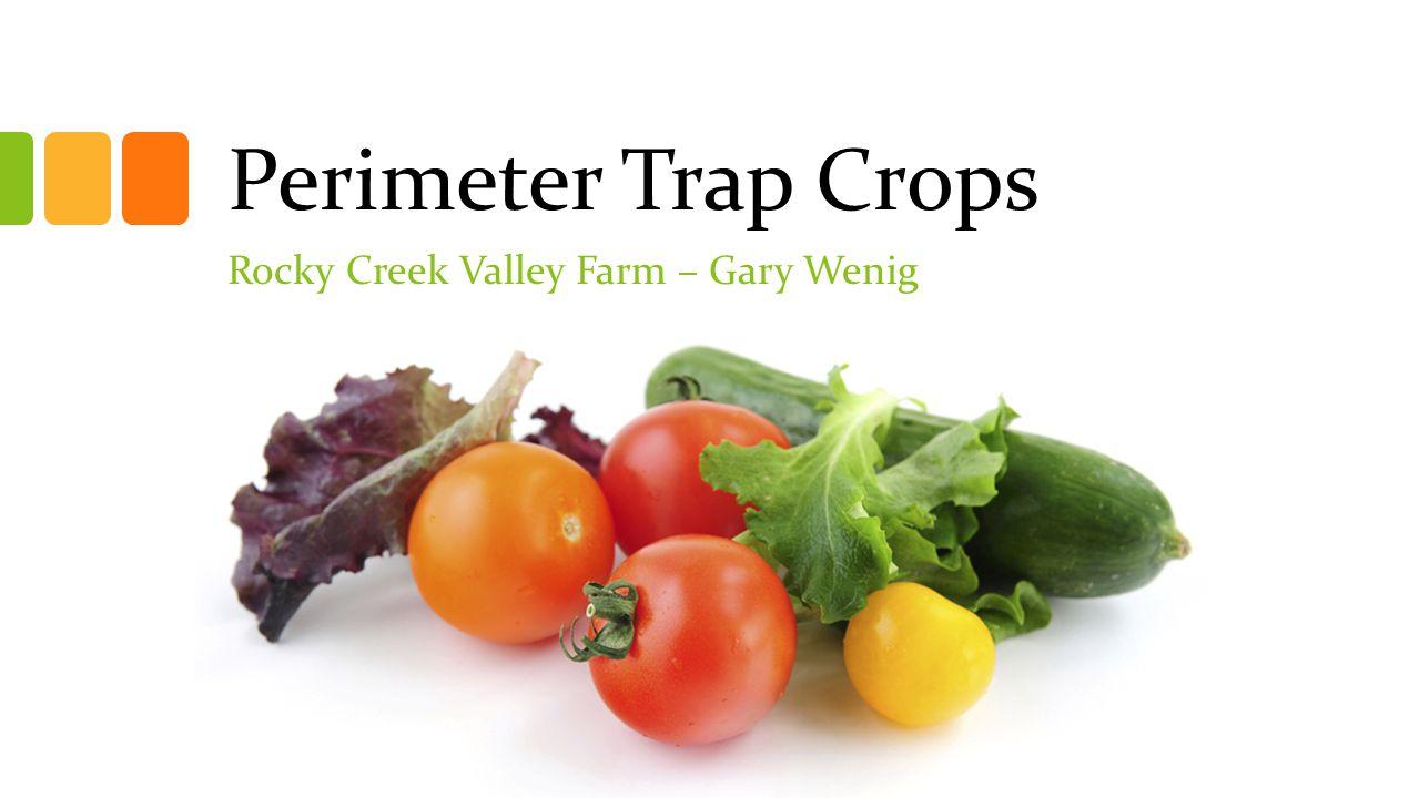 Perimeter Trap Crops Rocky Creek Valley Farm – Gary Wenig