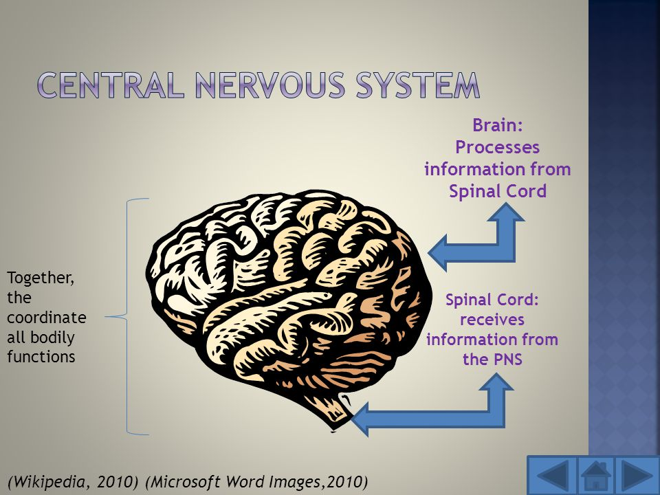  Many neurological problems occur in the critically ill patient but may also occur from common health problems.