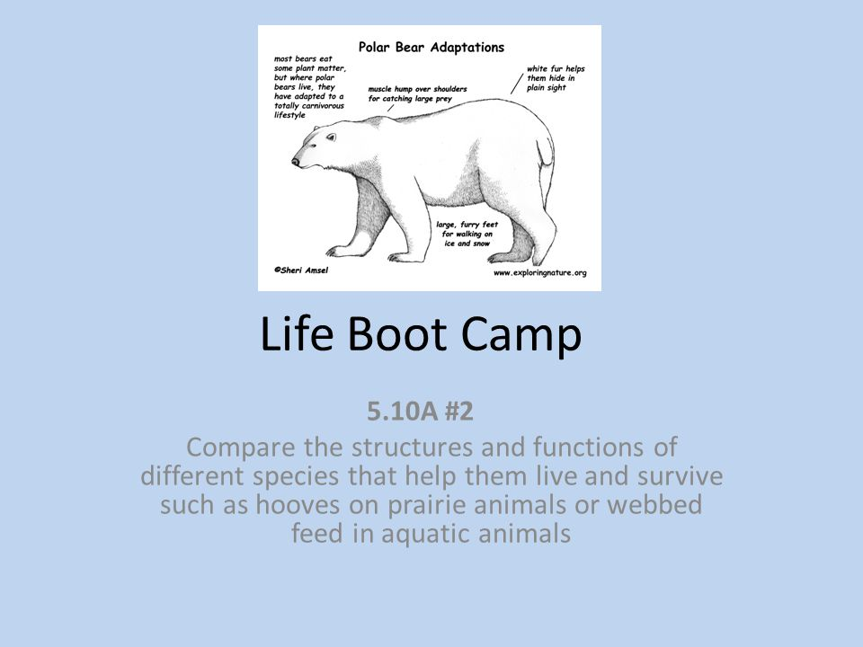 Life Boot Camp 5.10A #2 Compare the structures and functions of different species that help them live and survive such as hooves on prairie animals or webbed feed in aquatic animals