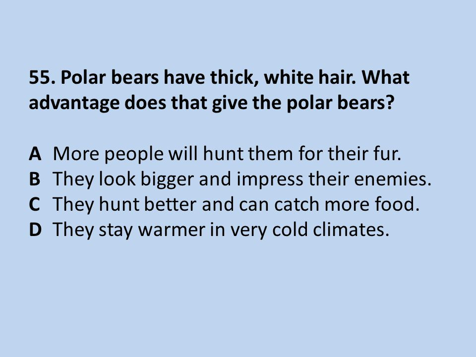 55. Polar bears have thick, white hair. What advantage does that give the polar bears? AMore people will hunt them for their fur. BThey look bigger an