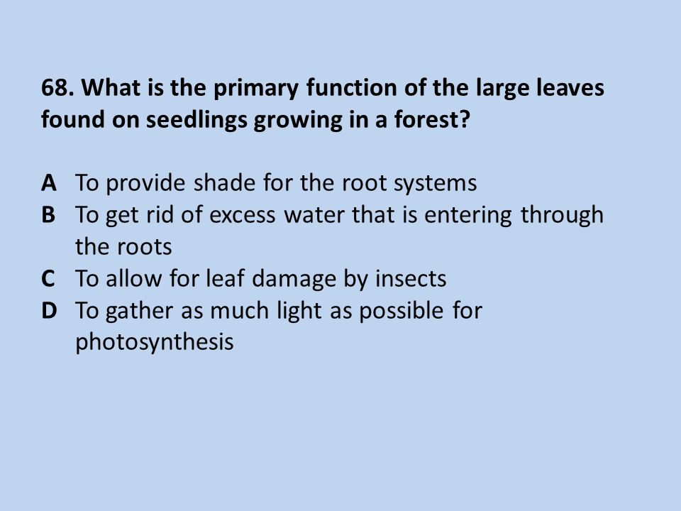 68. What is the primary function of the large leaves found on seedlings growing in a forest? ATo provide shade for the root systems BTo get rid of exc