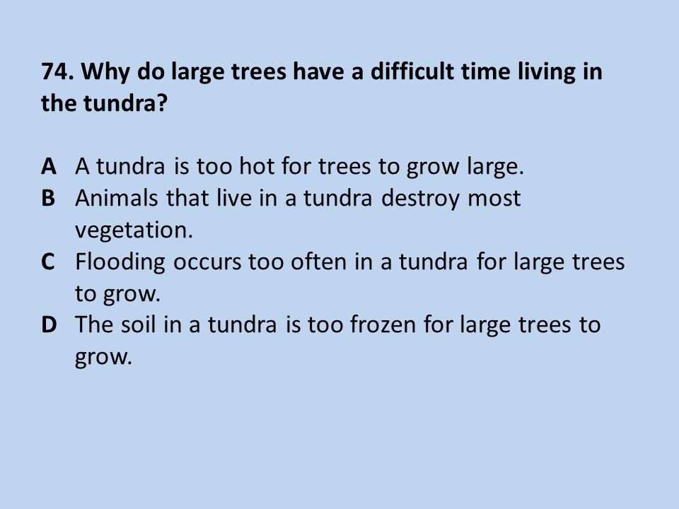74.Why do large trees have a difficult time living in the tundra.