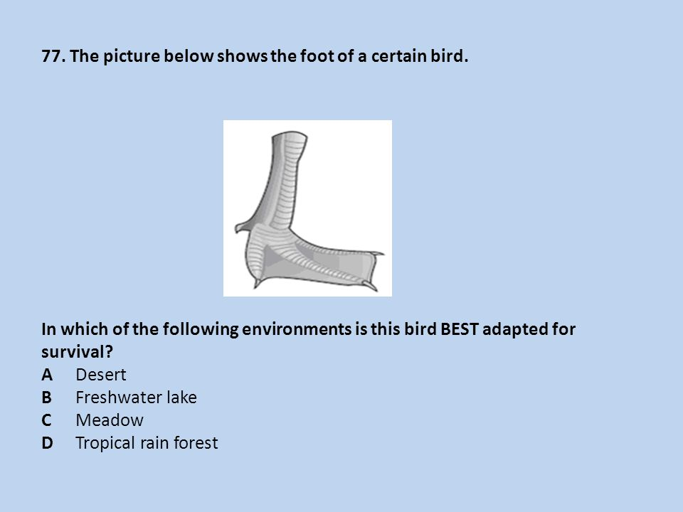 77.The picture below shows the foot of a certain bird.