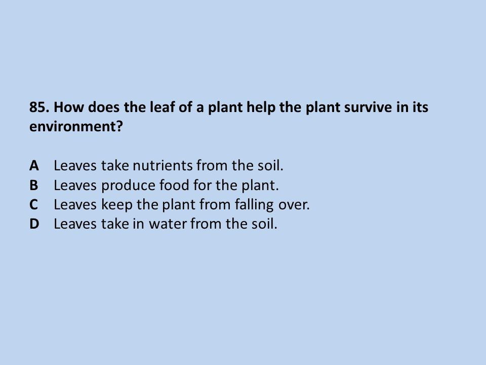 85.How does the leaf of a plant help the plant survive in its environment.