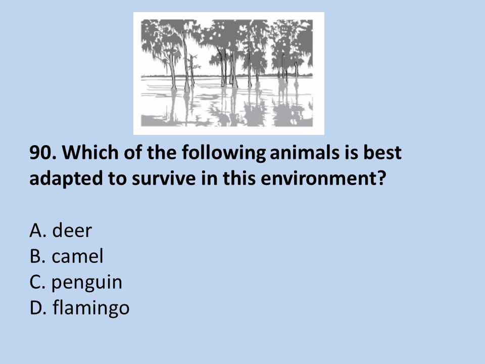 90.Which of the following animals is best adapted to survive in this environment.