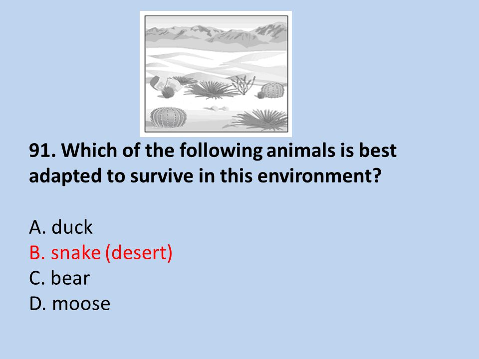 91.Which of the following animals is best adapted to survive in this environment.