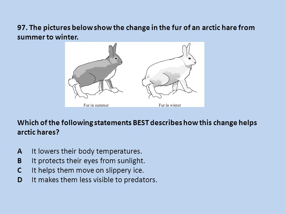 97. The pictures below show the change in the fur of an arctic hare from summer to winter. Which of the following statements BEST describes how this c