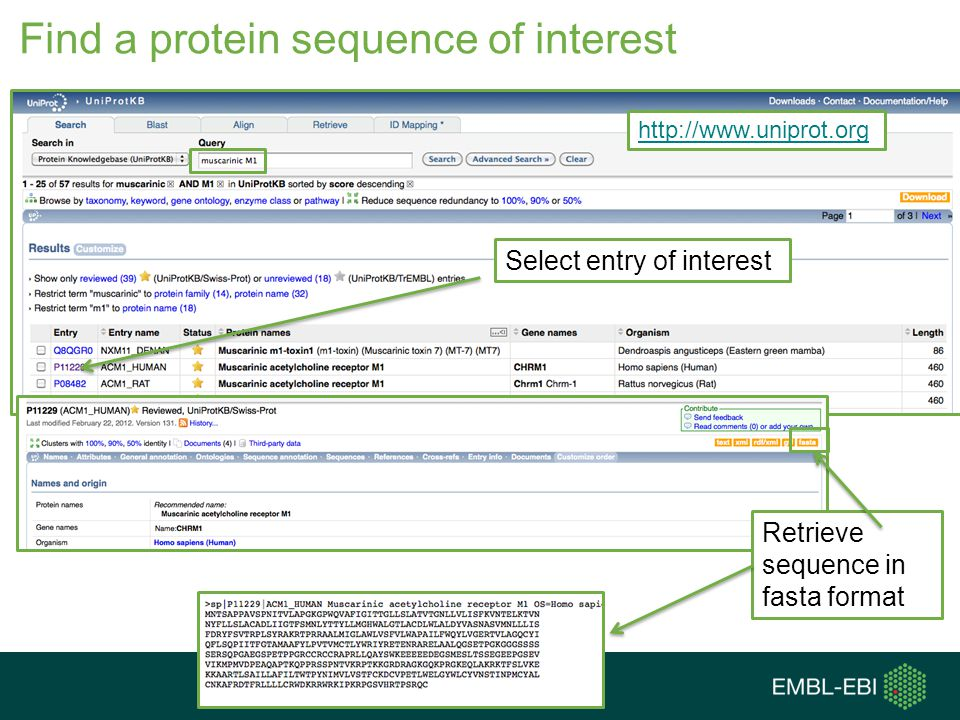 Find a protein sequence of interest Select entry of interest http://www.uniprot.org Retrieve sequence in fasta format