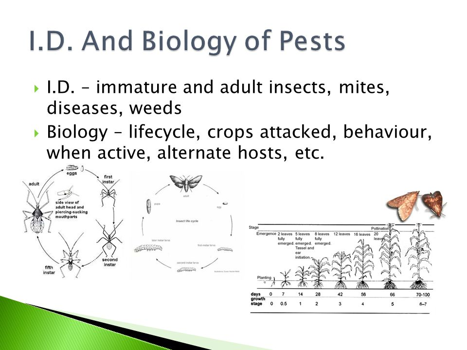  I.D. – immature and adult insects, mites, diseases, weeds  Biology – lifecycle, crops attacked, behaviour, when active, alternate hosts, etc.