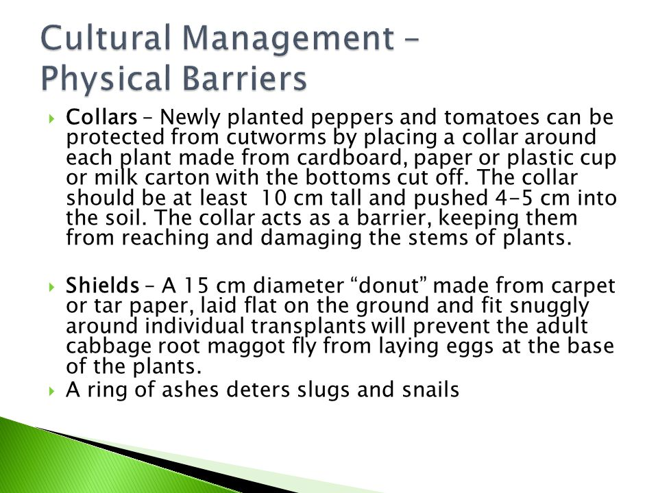  Collars – Newly planted peppers and tomatoes can be protected from cutworms by placing a collar around each plant made from cardboard, paper or plas