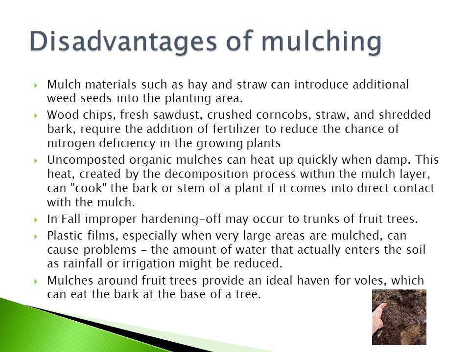  Mulch materials such as hay and straw can introduce additional weed seeds into the planting area.  Wood chips, fresh sawdust, crushed corncobs, str